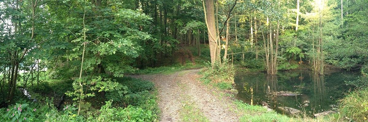Naturbestattung Waldbild