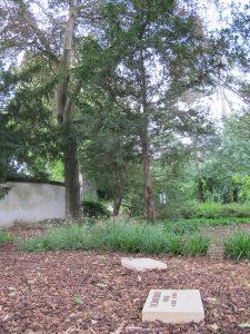 Grabstellen zur Bestattung am Baum
